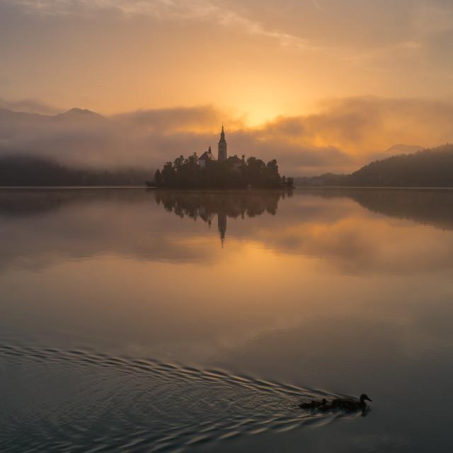 """Ducks on Lake Bled"" stock image"
