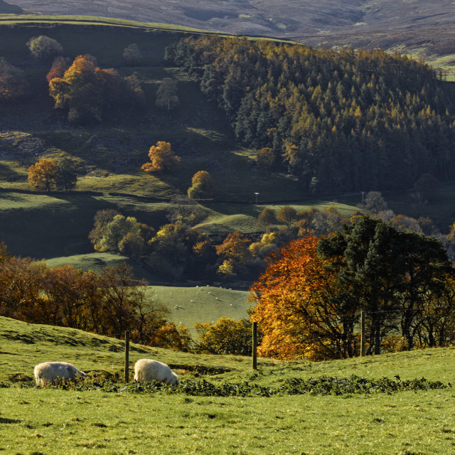 """""""Autumn Sunshine in the Yorkshire Dales"""" stock image"""