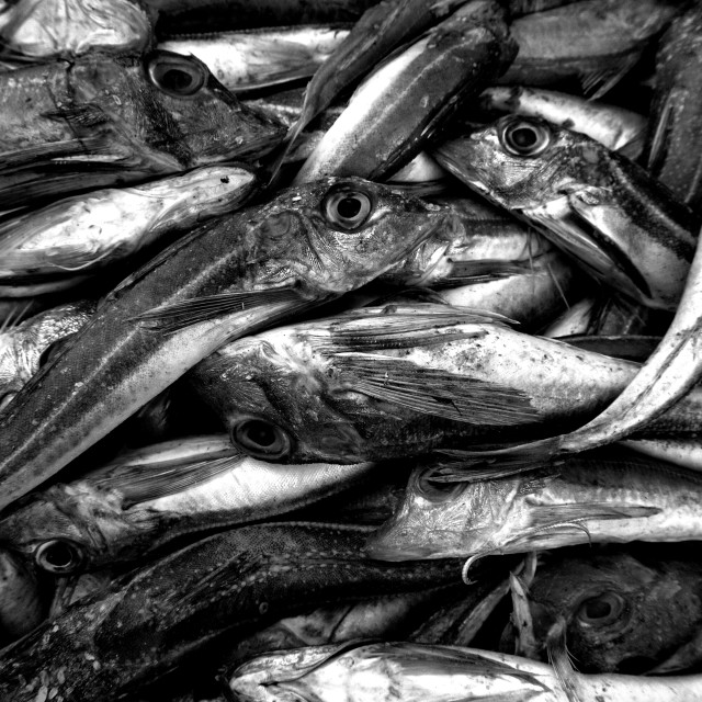 """""""A pile of old fish."""" stock image"""