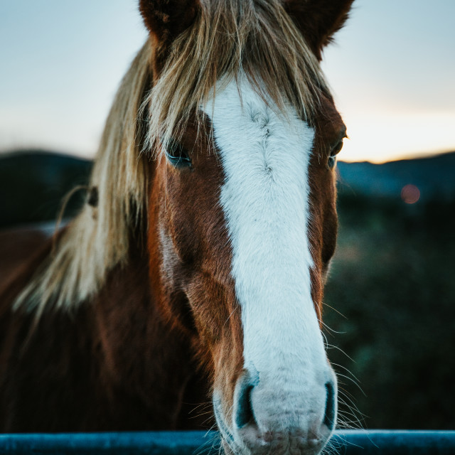 """""""A Connemara Horse"""" stock image"""