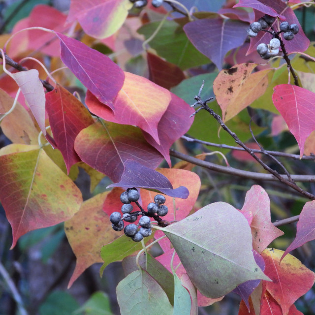 """Autumn Palette 1"" stock image"