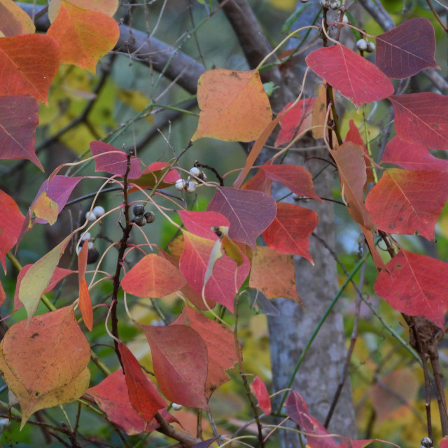 """Autumn Palette 2"" stock image"