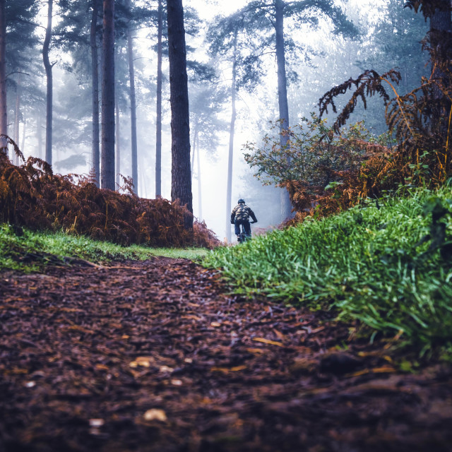 """""""A foggy Thetford Forest, High Lodge, Thetford, Suffolk."""" stock image"""