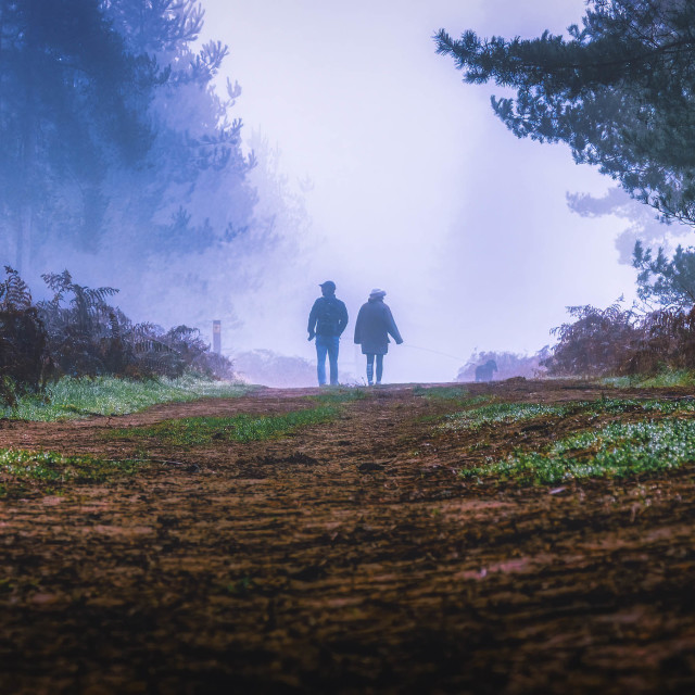 """""""A foggy morning walk from Thetford Forest."""" stock image"""