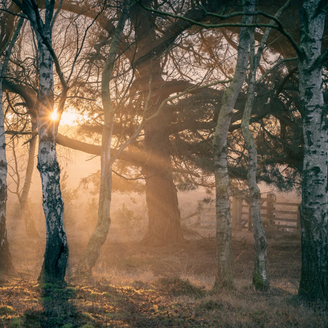 """Strensall Common at Sunrise"" stock image"