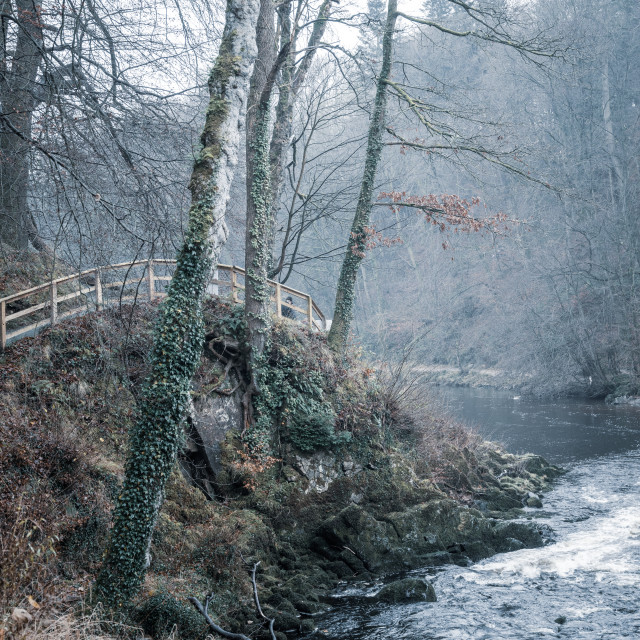 """Trees on the River Wharfe"" stock image"