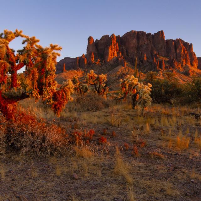 """Orange lit cactus catching the last sun of the day"" stock image"