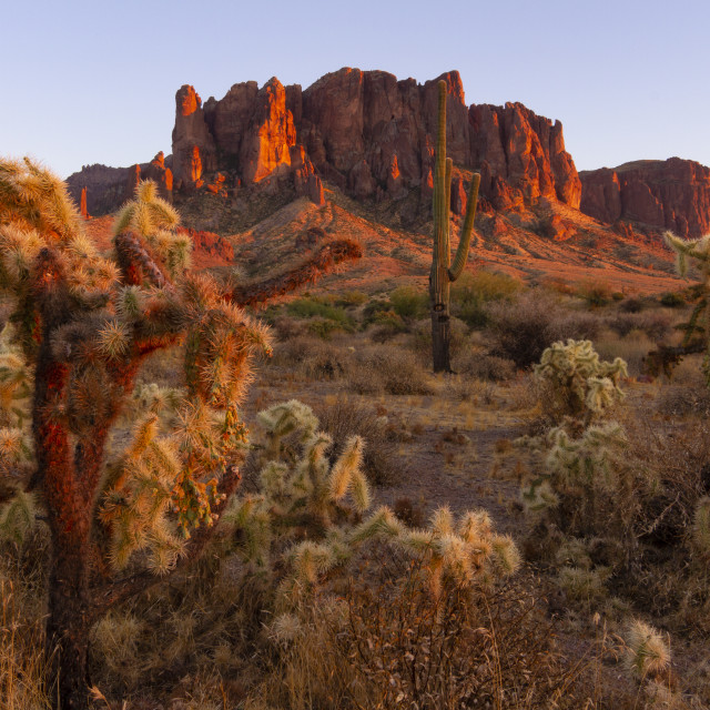 """""""Various cactus at sunset with mountains in the background"""" stock image"""
