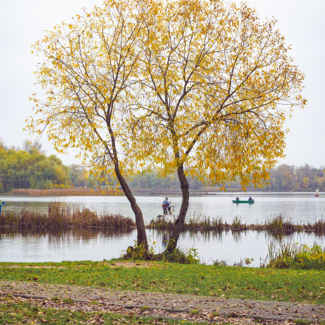 """""""Willow close to the Dnieper river in Kiev"""" stock image"""