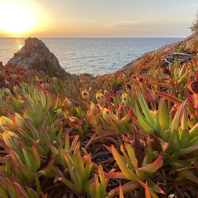 """Corsican sunset, Ile Rousse."" stock image"