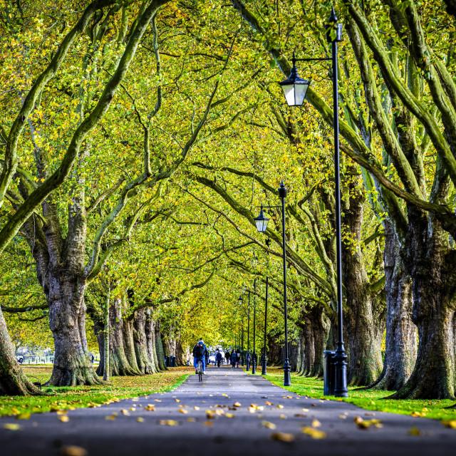 """Jesus Green foot path, Cambridge UK."" stock image"