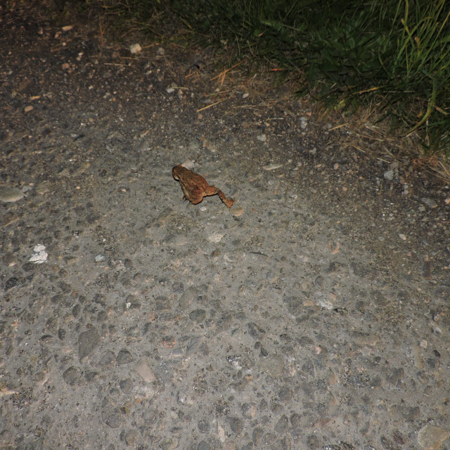 """""""Frog in the Highlands of Scotland 2015"""" stock image"""