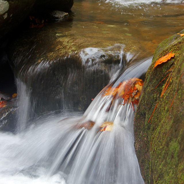 """High Shoals Falls leaf"" stock image"