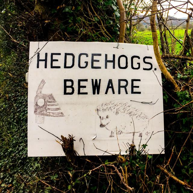 """Hedgehogs Beware Warning Sign on Rural Road."" stock image"