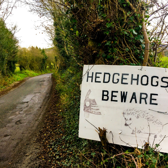 """Hedgehogs Beware Warning Sign on Rural Road."" stock image"