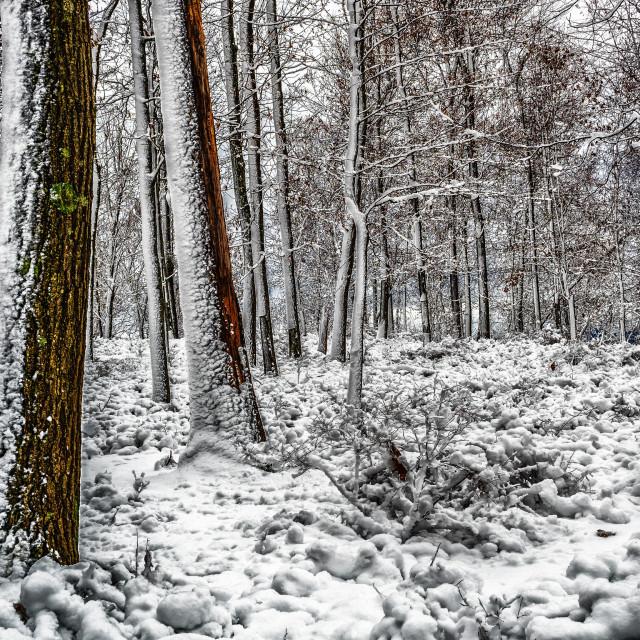 """""""November Snow"""" stock image"""