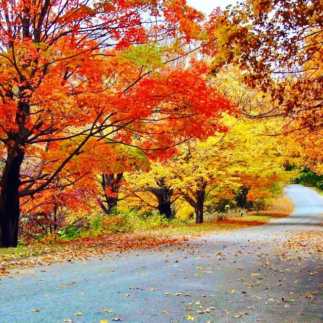 """Fall canopy"" stock image"
