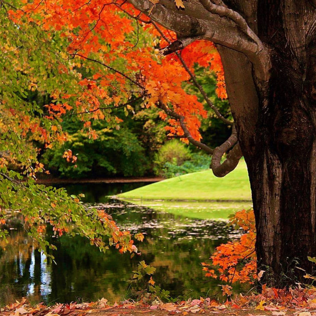 """""""Fall color over pond"""" stock image"""