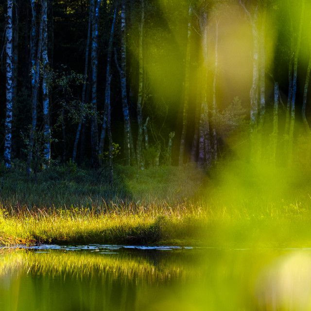 """""""Calm lake and green leaves in front of forest"""" stock image"""