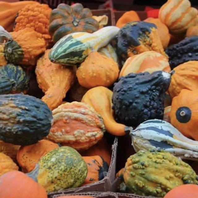 """""""Gourds"""" stock image"""