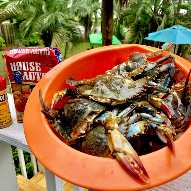 """""""Soft shell crab uncooked"""" stock image"""