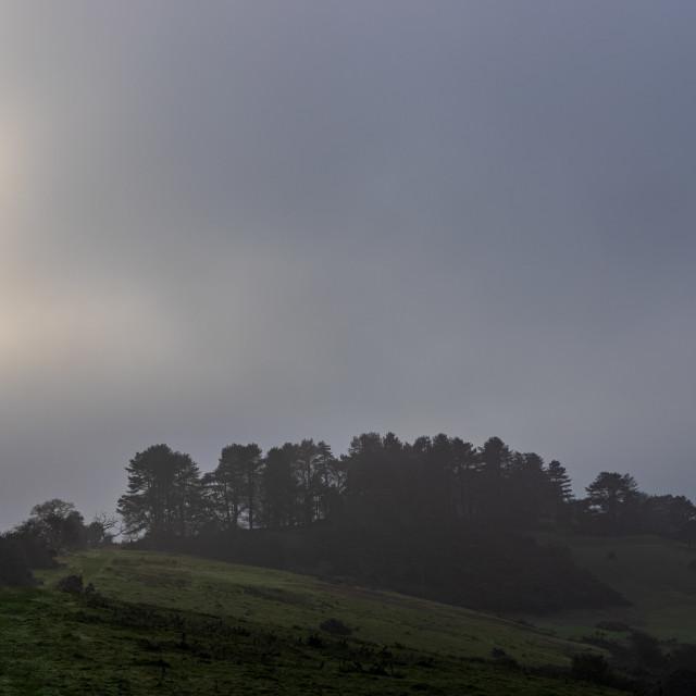 """Breaking through the fog over Penbury Knoll"" stock image"