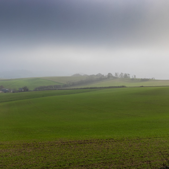 """""""Murky day on Cranborne Chase"""" stock image"""