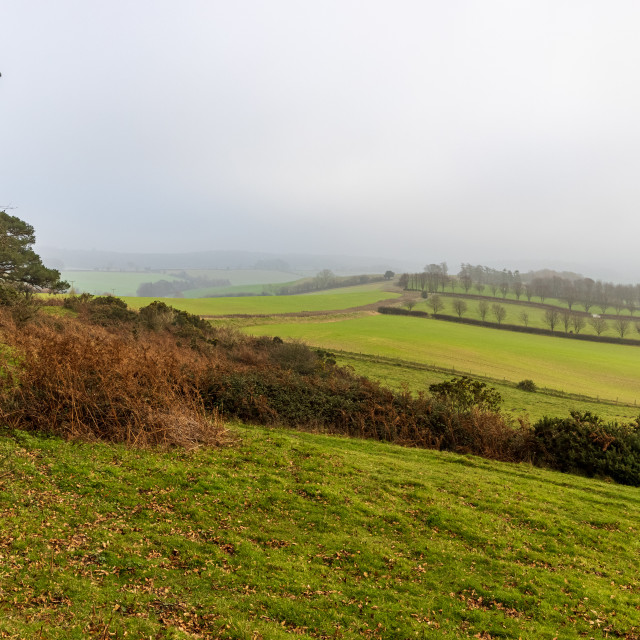 """Foggy afternoon, Cranborne Chase"" stock image"