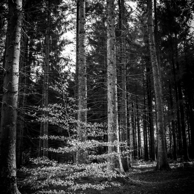 """My Manchester - Macclesfield Forest Portrait"" stock image"