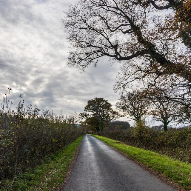 """""""Pitymoor Lane, Southwick"""" stock image"""