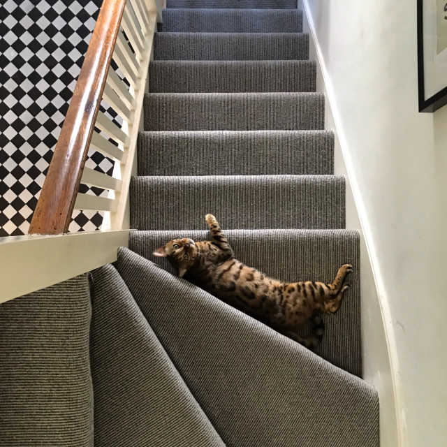 """""""Bengal cat on stairs"""" stock image"""