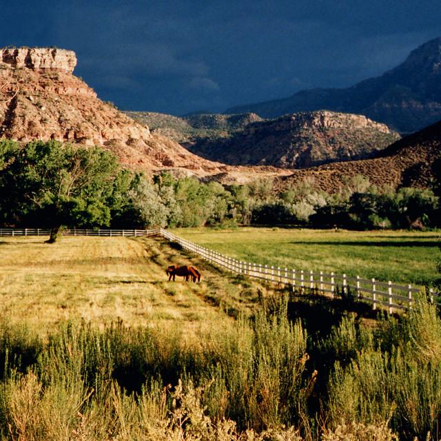 """""""Horses, Springdale Utah Utah"""" stock image"""