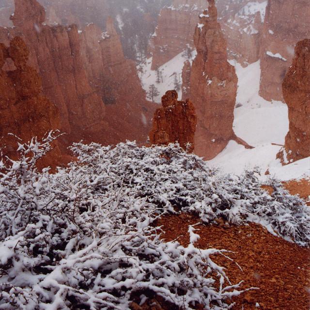 """Bryce Canyon snow"" stock image"
