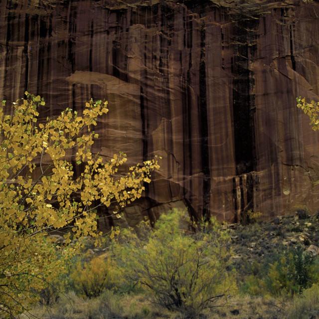 """""""Desert varnish and cottonwoods"""" stock image"""