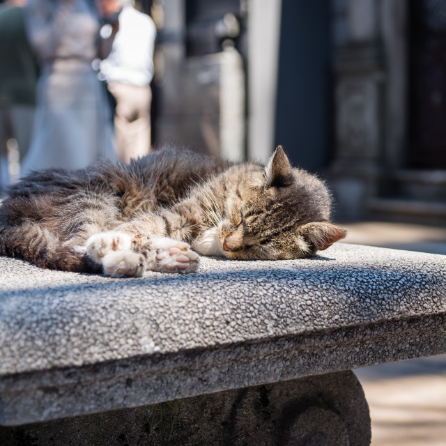 """A cat relaxing in La Recoleta Cemetery"" stock image"