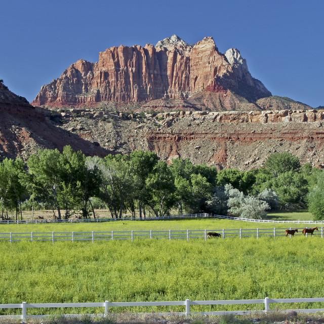 """""""Springdale Utah"""" stock image"""