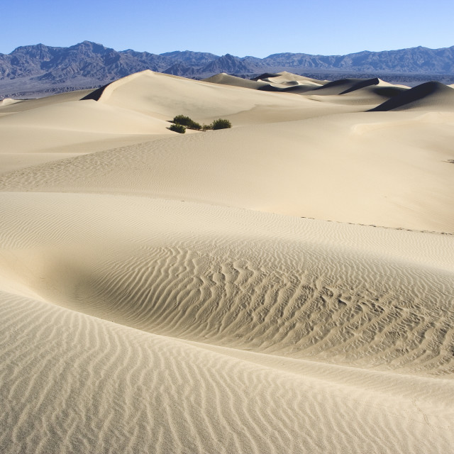 """""""Sand DuneDeath valley"""" stock image"""