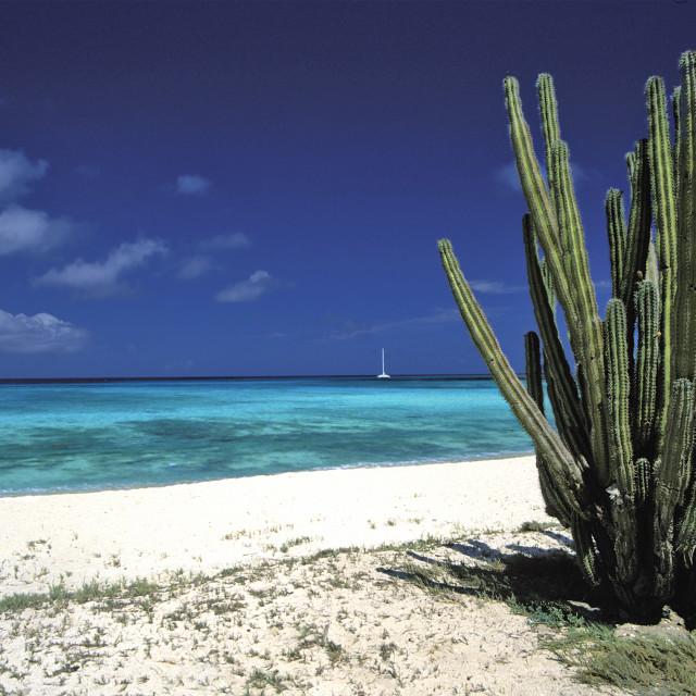 """""""Cactus, Eagle Beach"""" stock image"""