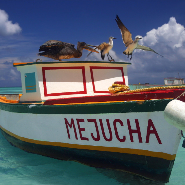 """Pelican biting seagull"" stock image"