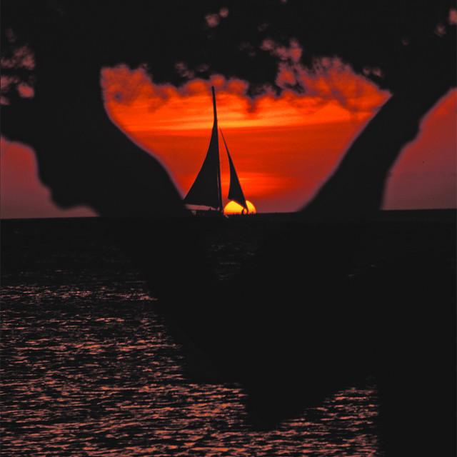 """Sailboat, DIvi Divi tree, Sunset"" stock image"