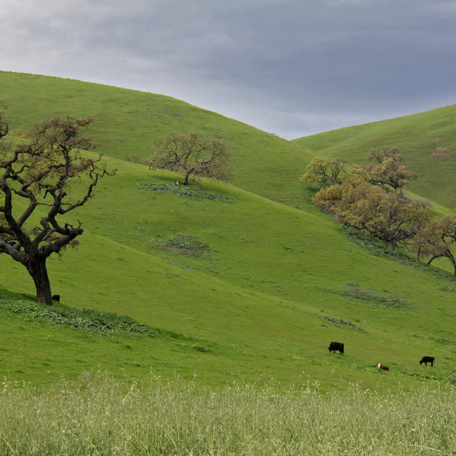 """Pasture, central California"" stock image"