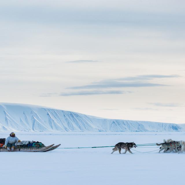 """""""Dog sledding on frozen sea"""" stock image"""