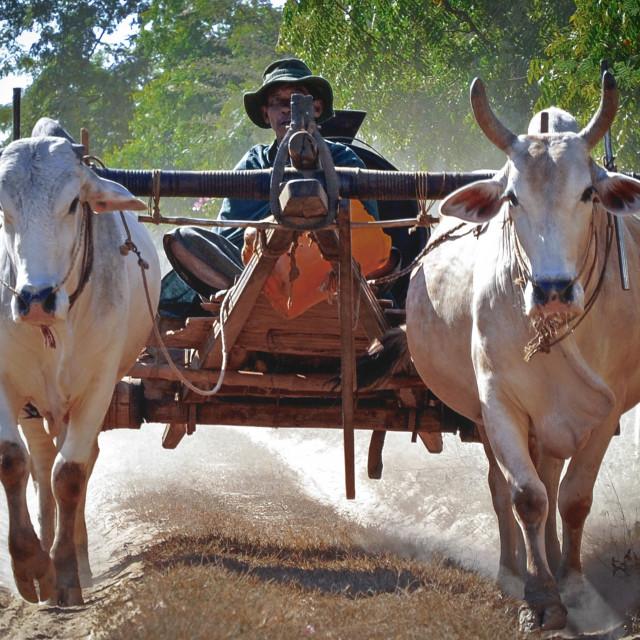 """farmer life"" stock image"