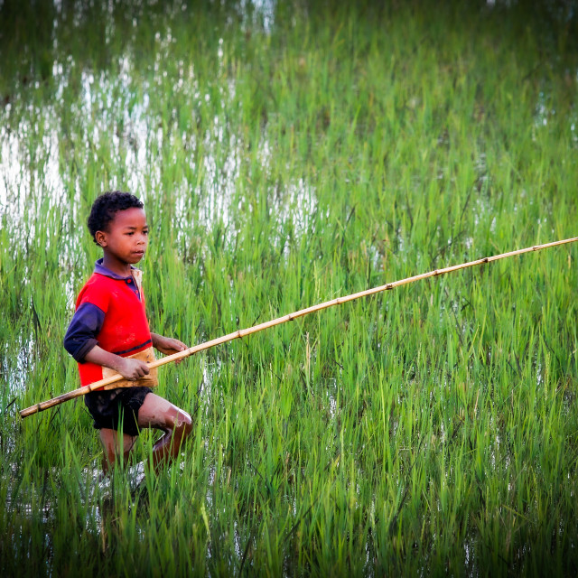 """boy in ricefield in Madagascar"" stock image"