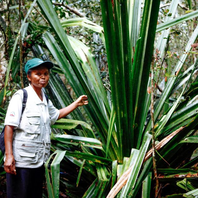 """""""Andasibe Mantadia Nationalpark"""" stock image"""
