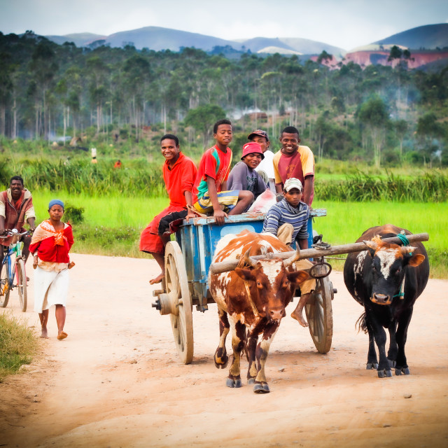 """Transport in Madagascar"" stock image"