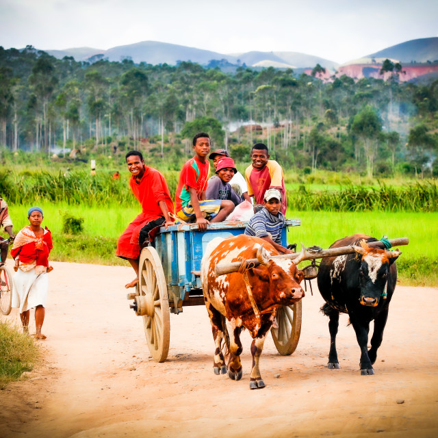 """Transport in Madagascar"" stock image"