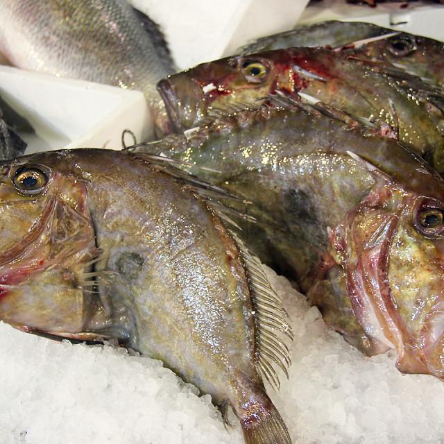 """Venice fishmarket"" stock image"
