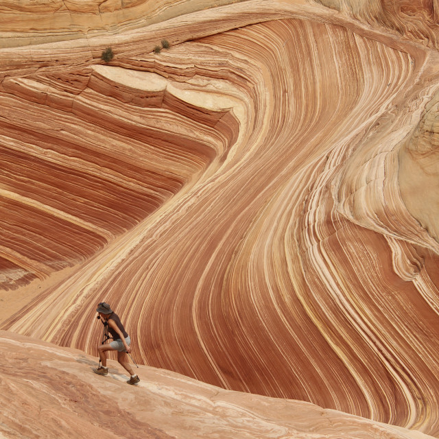 """""""Hiker in the wave, north coyote Buttes Arizona"""" stock image"""