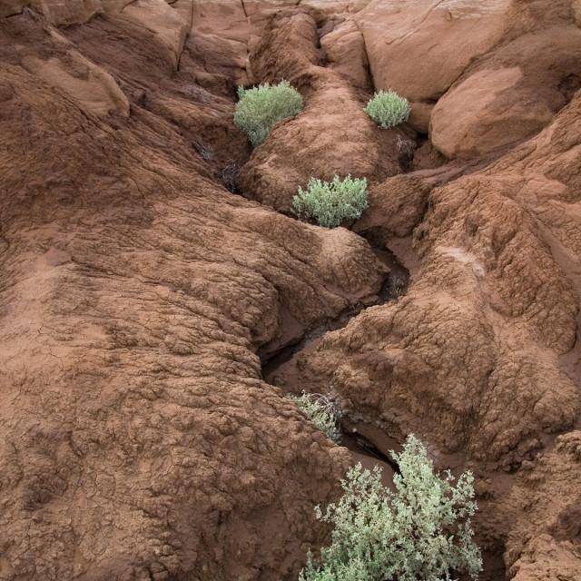 """Bushes, Paria wilderness, Utah"" stock image"